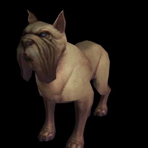 Dog Hunter Pet World Of Warcraft