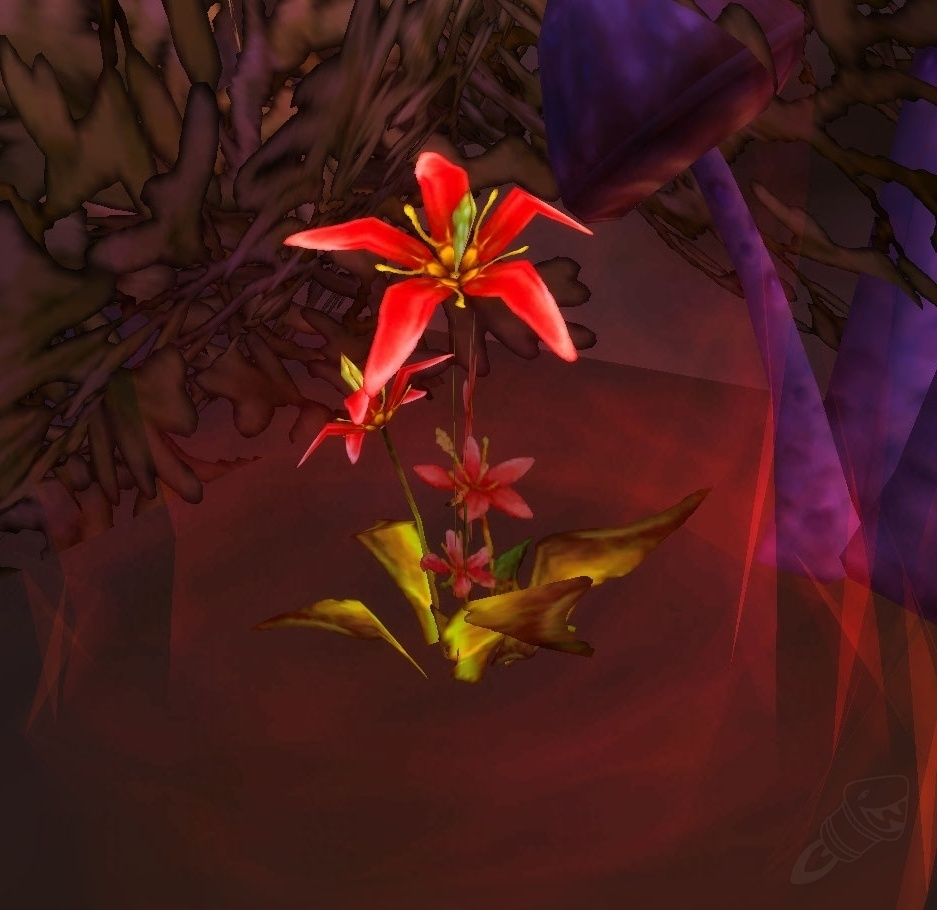 Sanguine Hibiscus Item World Of Warcraft