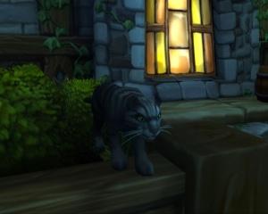 Cat Carrier (Black Tabby) - Item - World of Warcraft